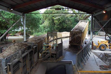 Mossman-sugarmill-raw-cane