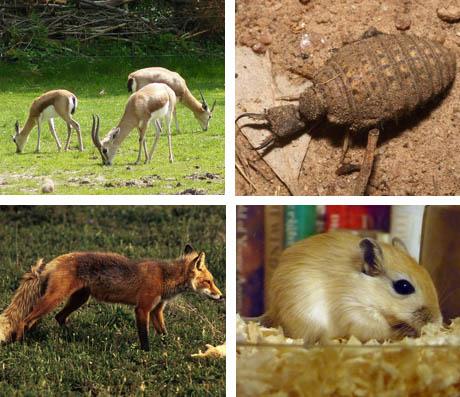 Animals of Arava