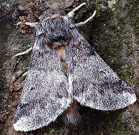 Oak Processionary Moth Daily Mail