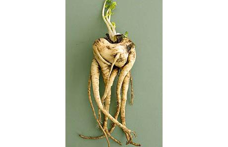 Ugly parsnip