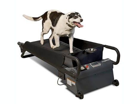 Dog on treadmill 460