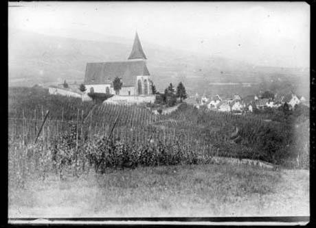 France vineyard 460