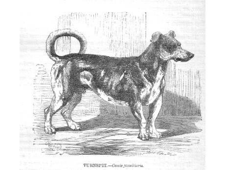 Turnspitdog-1862 460