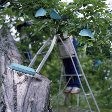 Bags for Apples, Early Summer, Aomori Prefecture