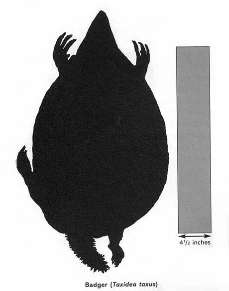 Badger 460