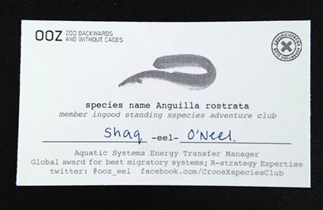 1 Eel business card 460