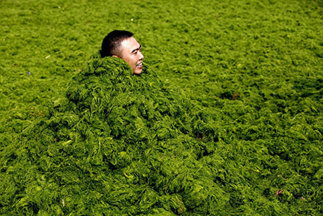 Man in sea lettuce