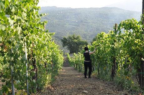 Recording vines 460