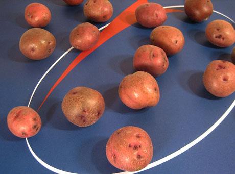 Keats lasa-potato-candidates 460