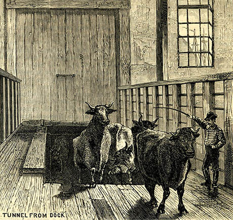 Cow Tunnel Engraving 460