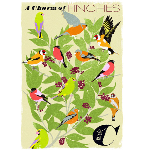 Charm of Finches 460