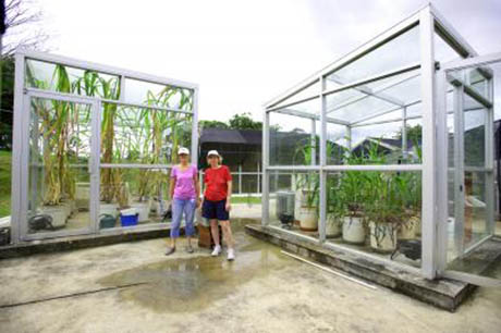 2 greenhouses side by side 460