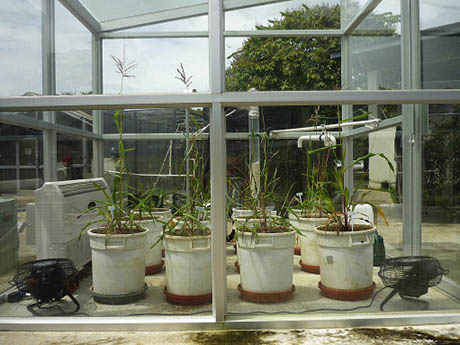 Greenhouse 460