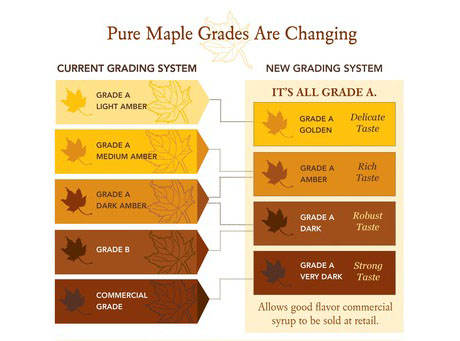 maple-syrup-grades-are-changing-page-0
