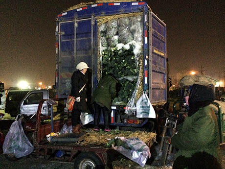 36 An ice-packed broccoli truck
