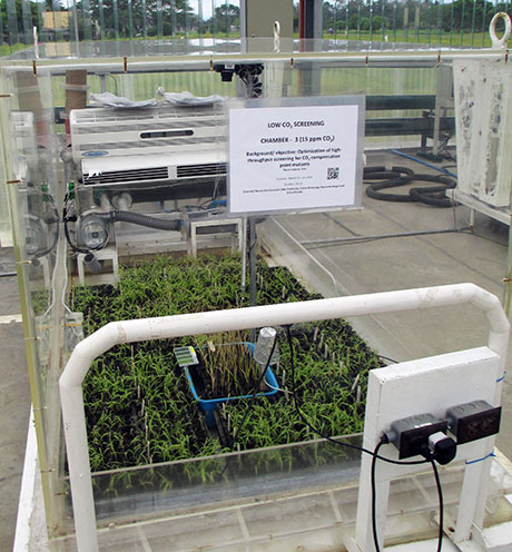 IRRI low co2 460