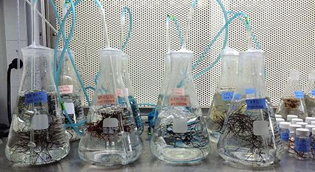 Seaweed Nursery 460