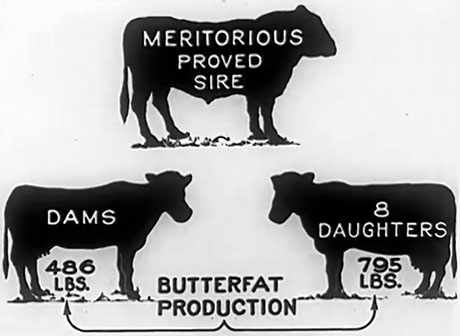 From USDA film 460