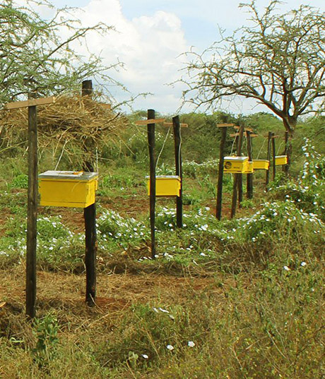 Beehive fence line 460