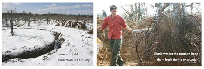 Excavation 2013 670