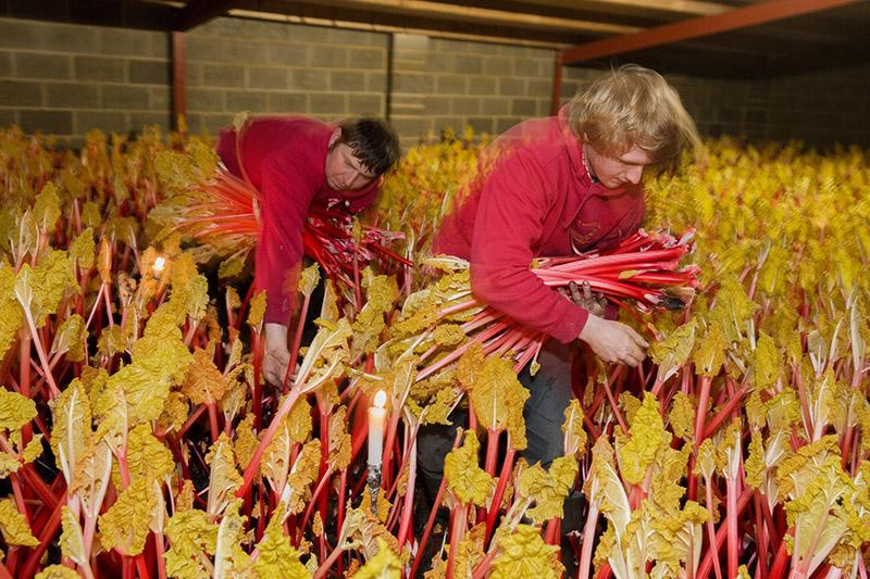 Rhubarb Martin Parr 800